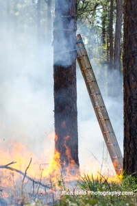 Time-lapse camera during a prescribed fire in Moody Forest.