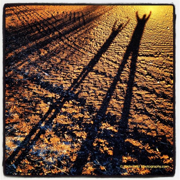 Shadows in Ojai Meadow Preserve, Ojai.