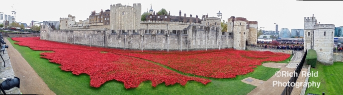 Panorama of red ceramic rose art installation in the moat of The Tower of London, UK.