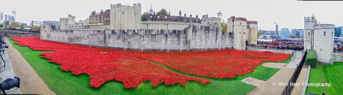 Panorama of 'Blood Swept Lands and Seas of Red' art installation of red ceramic roses at the Tower of London, England.